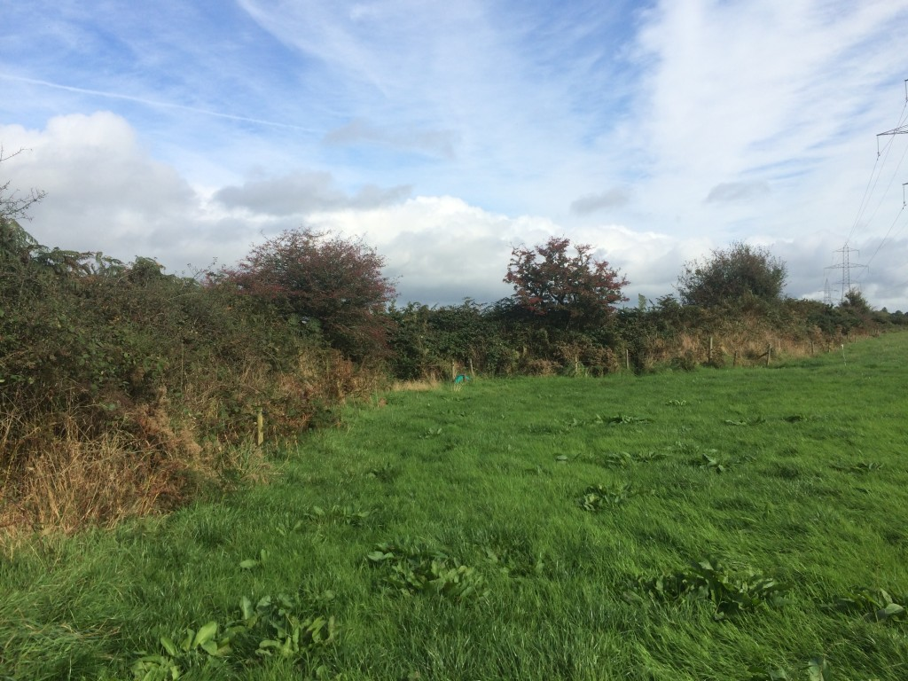 The site of the bomb factory in Ballynanelagh townland, looking ENE at the 'kink' in the townland boundary.
